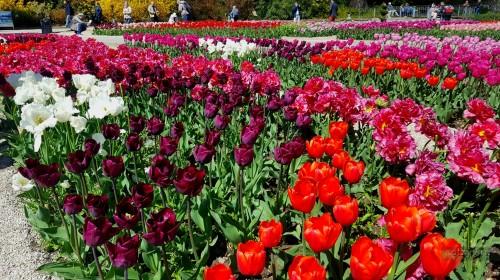 Парад тюльпанов на Майские праздники
