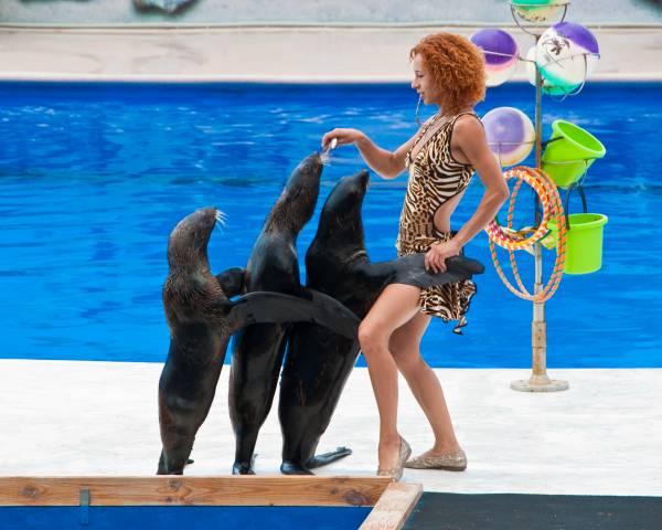Севастопольский дельфинарий - страна «Дельфиния»